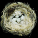 Birds possess an innate ability to build delicate nests from grass, twigs, or mud that regularly pass the most difficult test for any species: they cradle and protect the next generation.