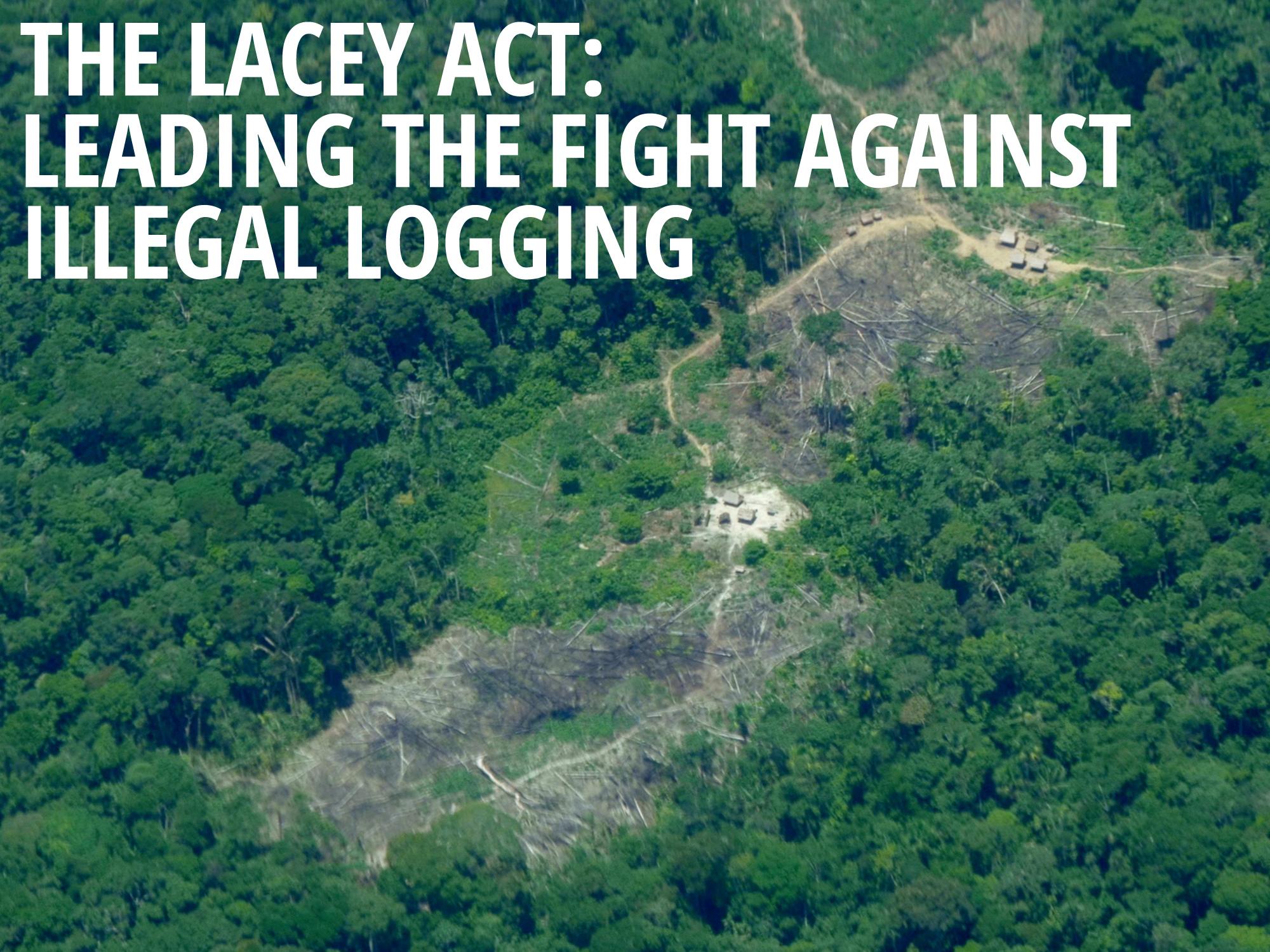 Illegal logging introduction essay helper