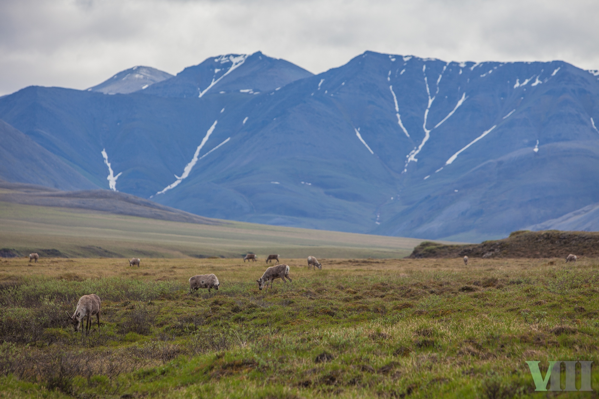 Victory! Another Year Passes With No Arctic Refuge Drilling Leases