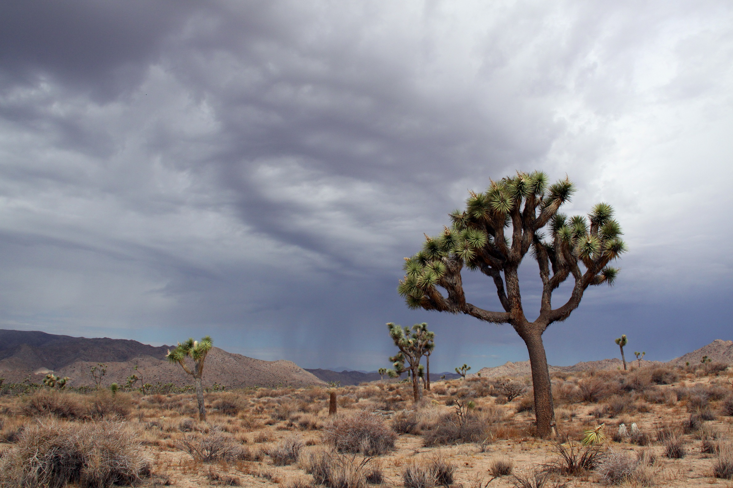 Celebrating 25 years of protecting California's deserts