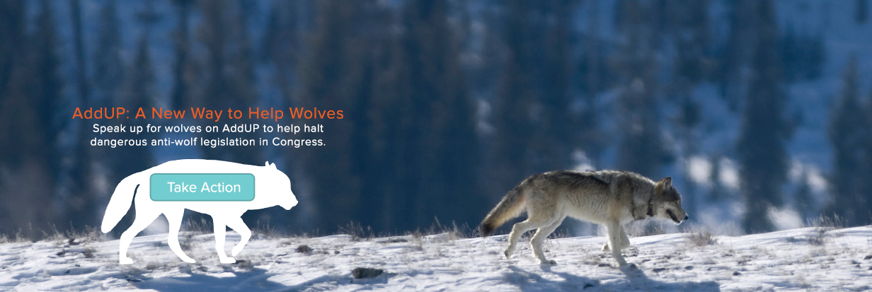 AddUP: A new way to help wolves -- send a message!