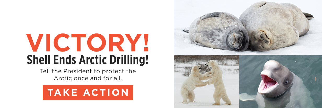 Send a message to protect the Arctic for good!