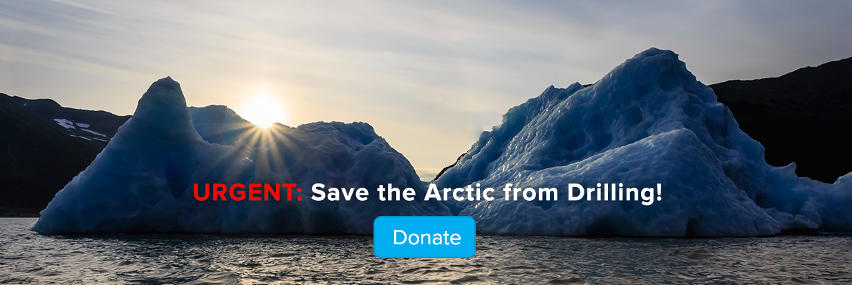 Urgent: Save the Arctic from Drilling -- make a donation today!