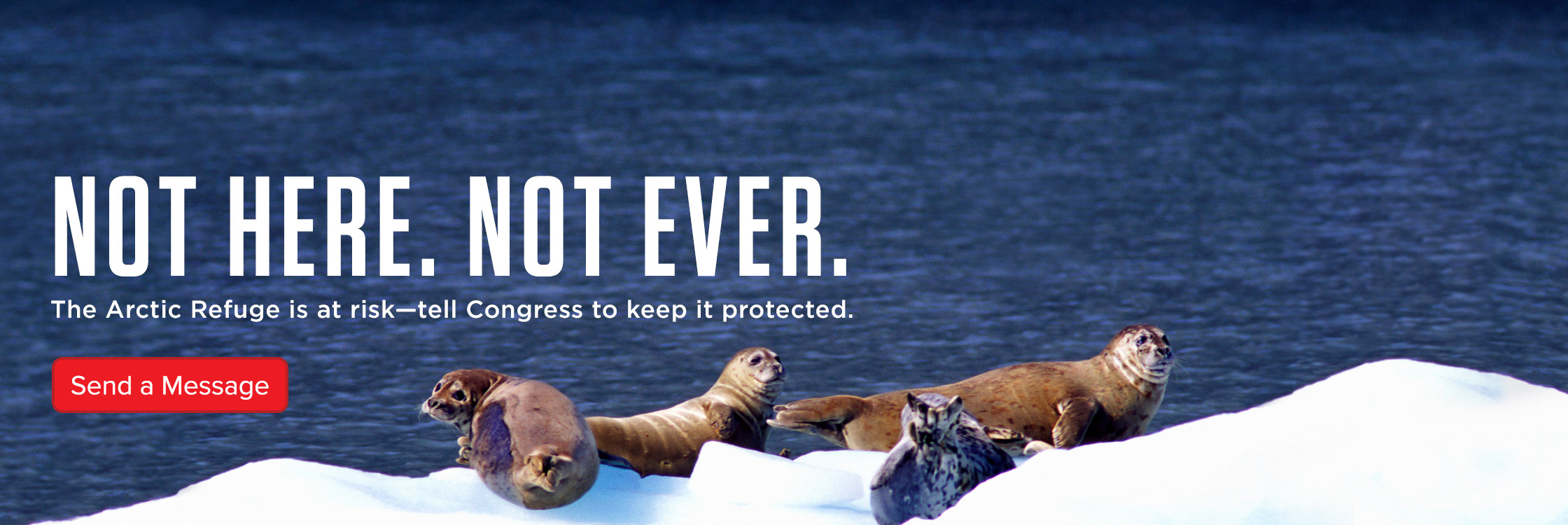 An image of seals with text: The Arctic Wildlife Refuge is at risk. Tell Congress to keep it protected.