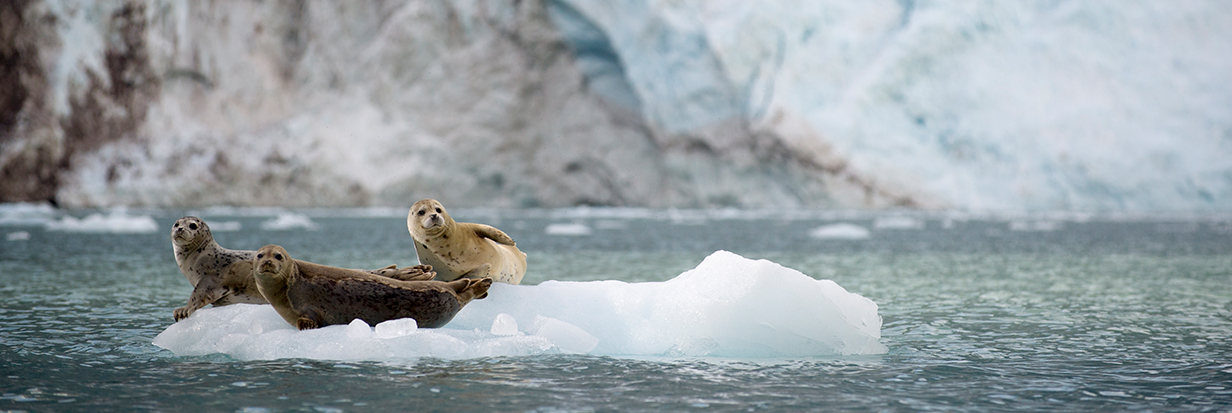 Tell President Obama to say Shell No to Shell's plan to drill in the Arctic Ocean.