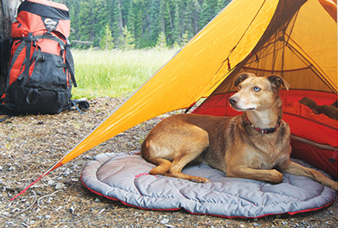 Backpacking Gear for Dogs | Sierra Club