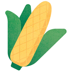 GMO Corn Illustration