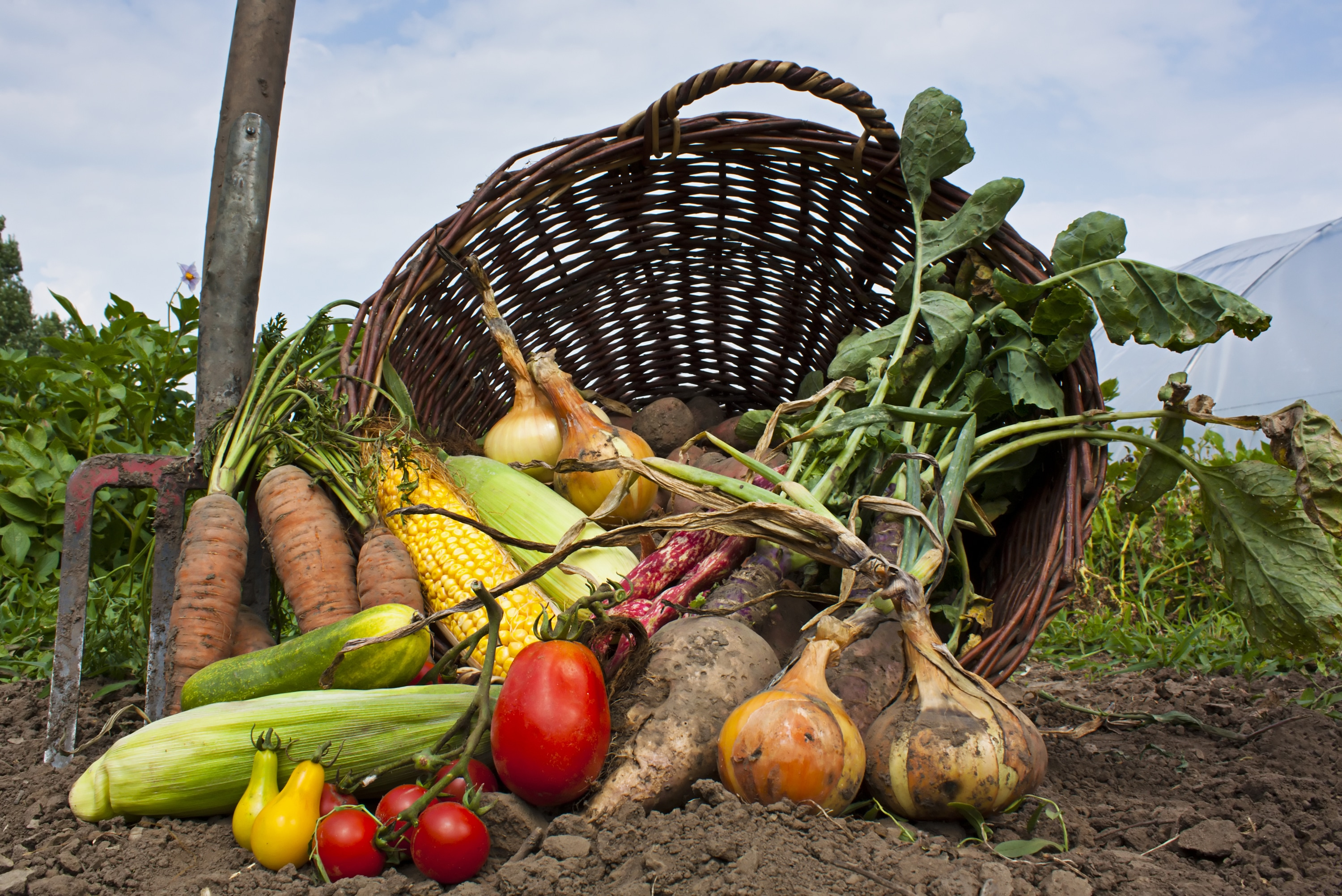 Organic for All: Assessing Food Equity Challenges