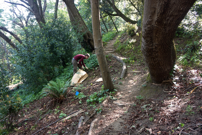 Native vegetation restoration in Berkeley's Garber Park. Photo courtesy Marilyn Goldhaber.