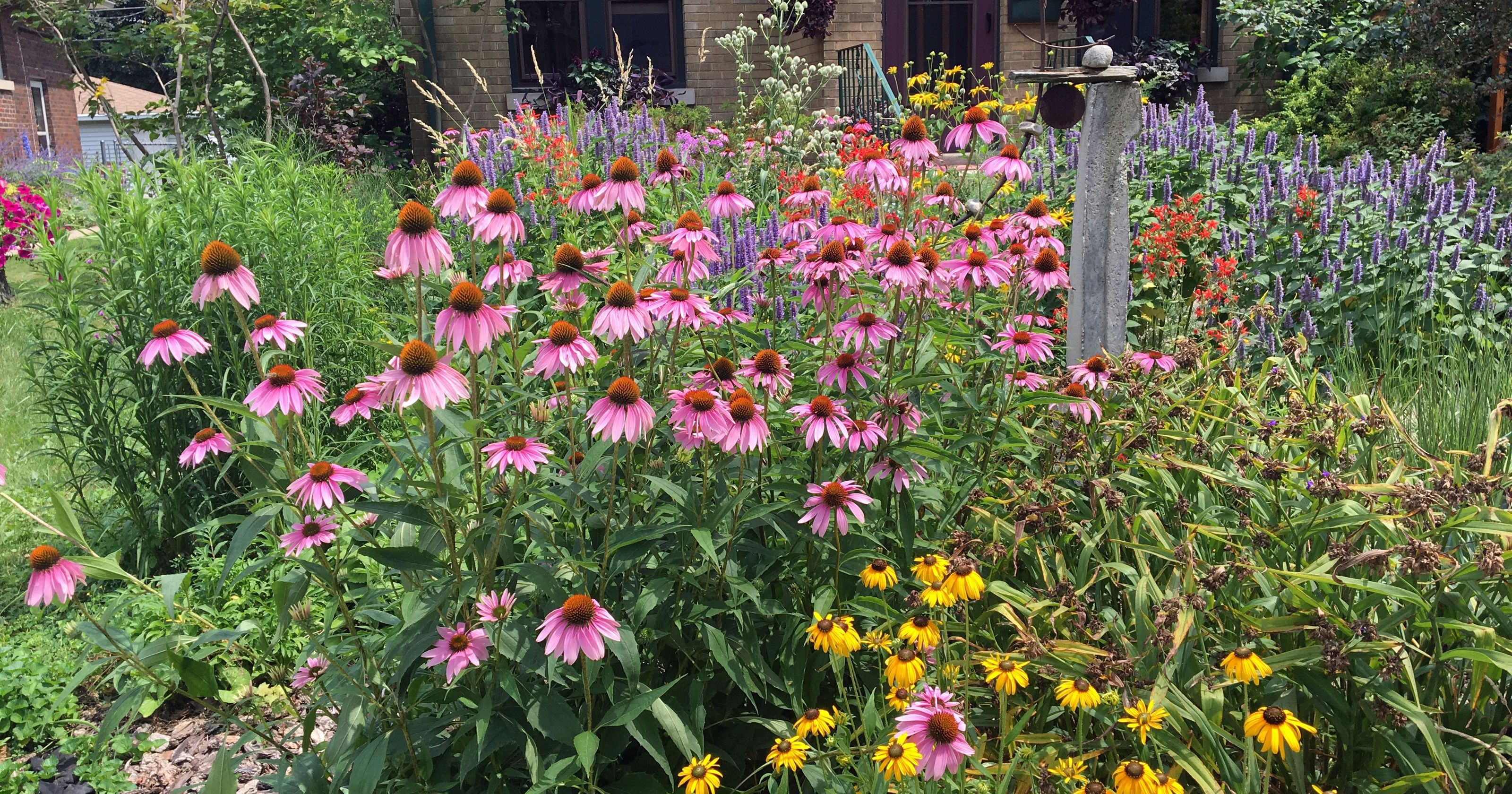 Planting For Pollinators A Tale Of Two Gardens By Susan