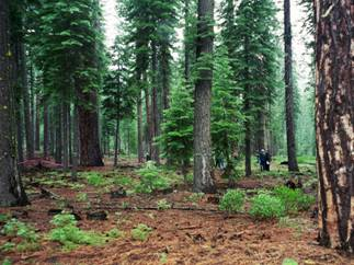 Forest Protection Committee | Sierra Club