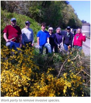 Work party to remove invasive species