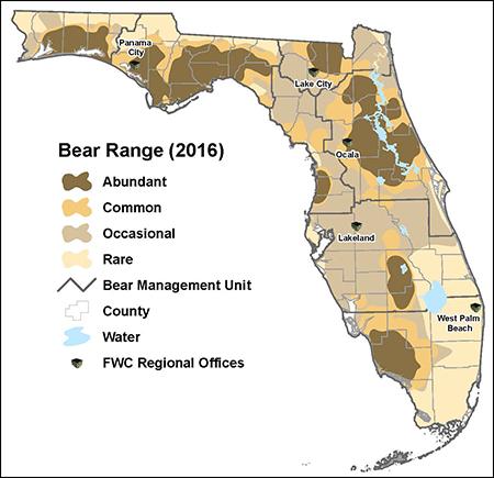 Florida Wildlife   Panthers & Black Bears | Sierra Club