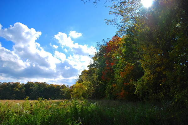 Camillus Forest Unique Area, photo by Jared Brickman