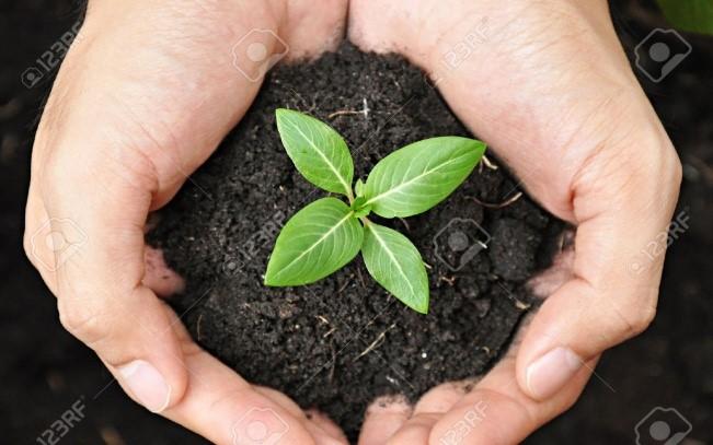 how to create an environmental steewardship program