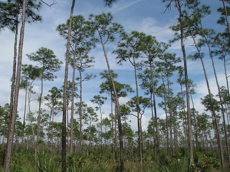 Pine Island Florida Government