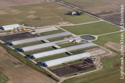 IDEM Animal Farms: Animal Farms - Indiana