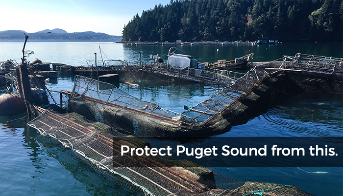 Atlantic salmon net pens in Puget Sound
