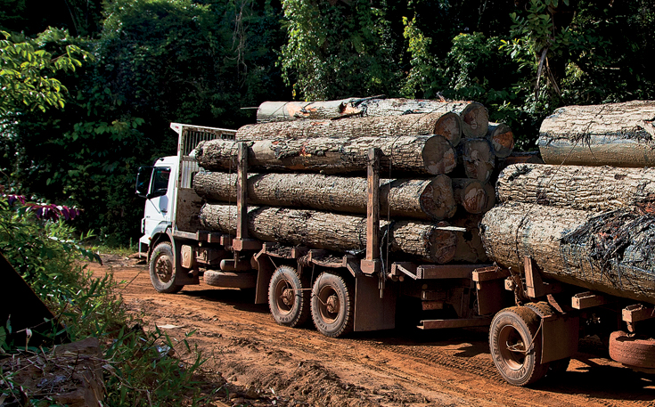 Branching Out Against Illegal Logging Sierra Club