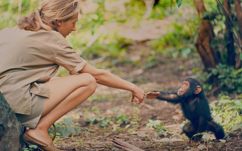 Brett Morgen Talks About Re Creating Jane Goodalls Jungle In Jane