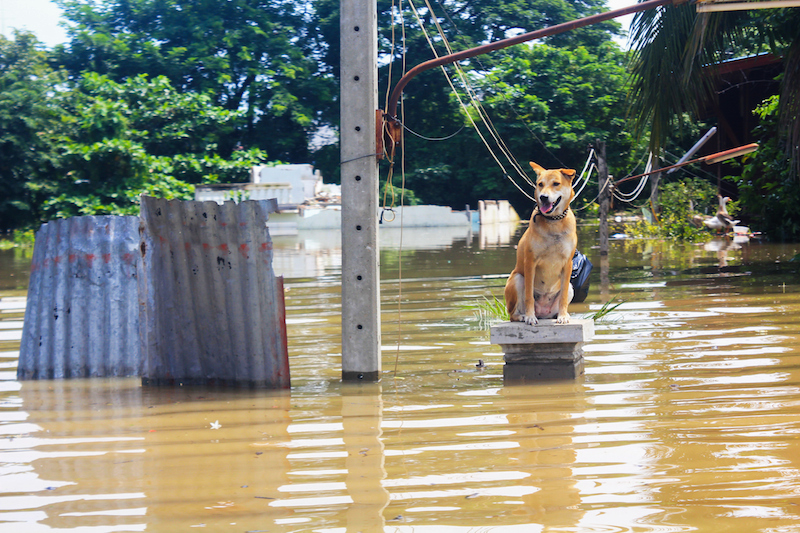 6067bb03ad28cf What Happens to Animals During Natural Disasters