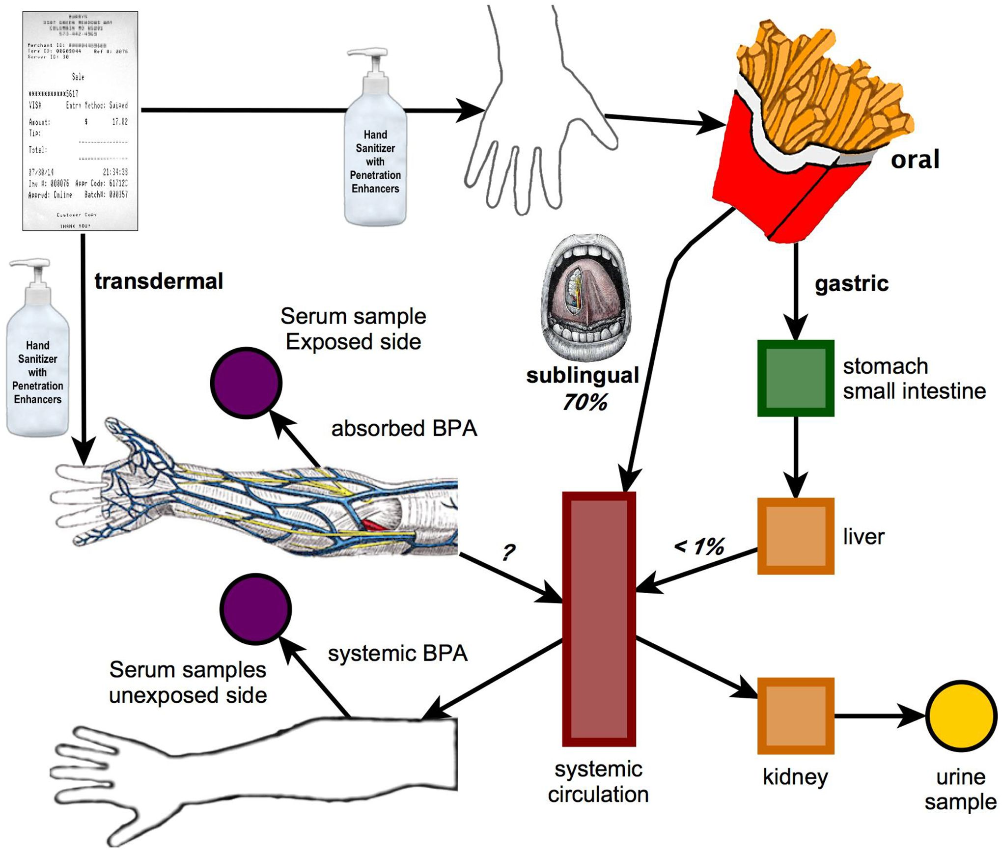 Neurological Effects of Bisphenol A and its Analogues