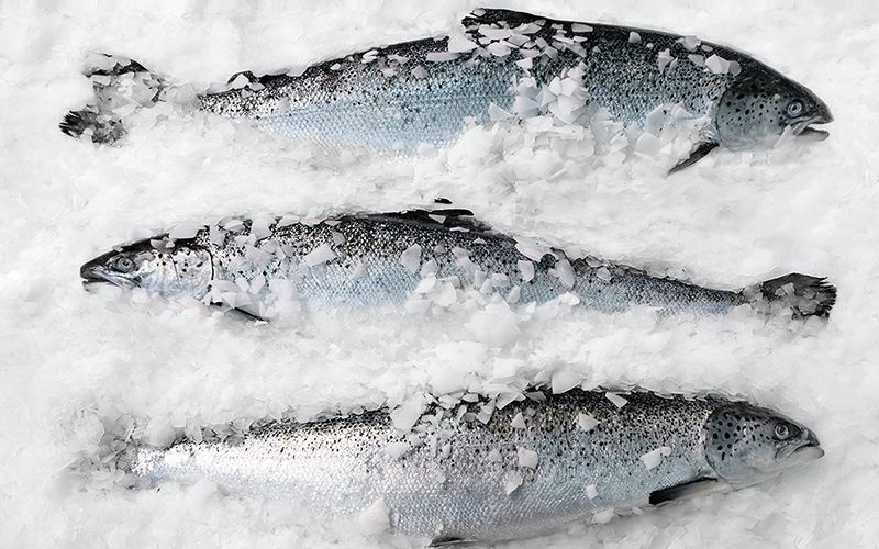 We're Running Out of Seafood, Yet We Waste Billions of Pounds of It