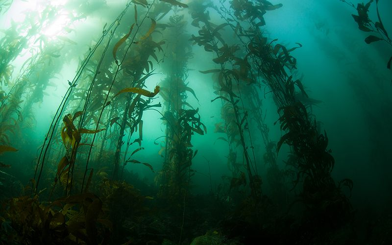 The Secrets Stored Within Seaweed