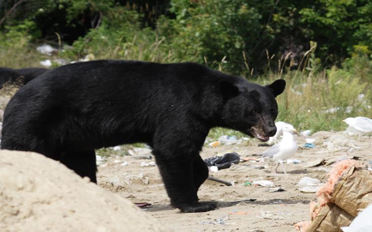 Good News, Bears
