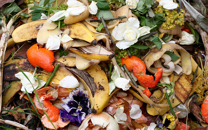 5 Ways To Cut Down On Post Thanksgiving Food Scraps