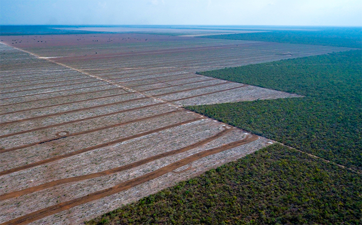 Burger King Linked to a Whopping Million-Plus Acres of Deforestation