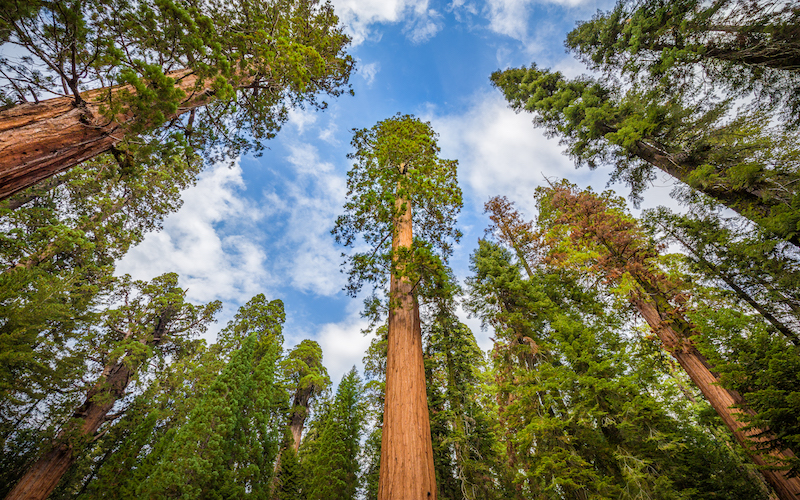 sequoia national park single hispanic girls Join facebook to connect with john valencia and others  homes for rent, national park service, hispanic  cal fire, sequoia and kings canyon national.