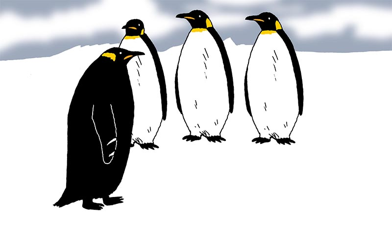 ICYMI: Black Penguin, Lonely Tortoise, Unemployed Climate Scientist, & More   Sierra Club