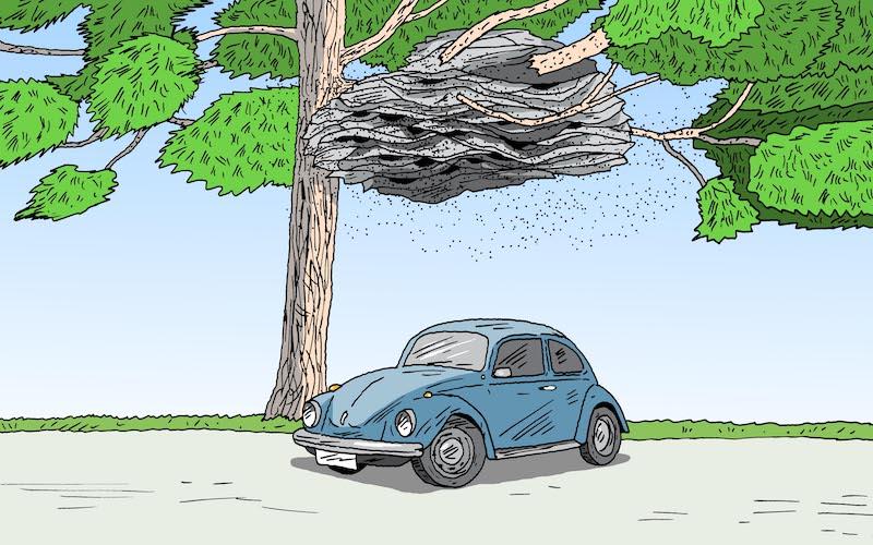 ICYMI: Giant Wasp Nests, Bourbon Pollution, & Chlamydia-Free Koalas