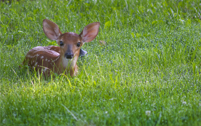 So You Want To Be A Wildlife Biologist Sierra Club