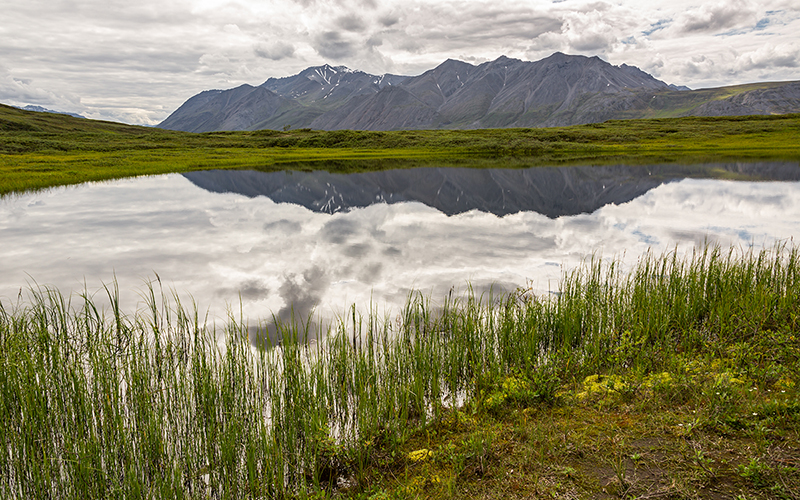 Turns Out That the Oil Industry Wasn't Interested in the Arctic Refuge After All