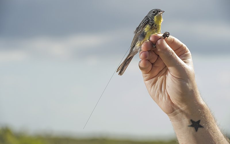What Happens to Birds and Butterflies When they Migrate?