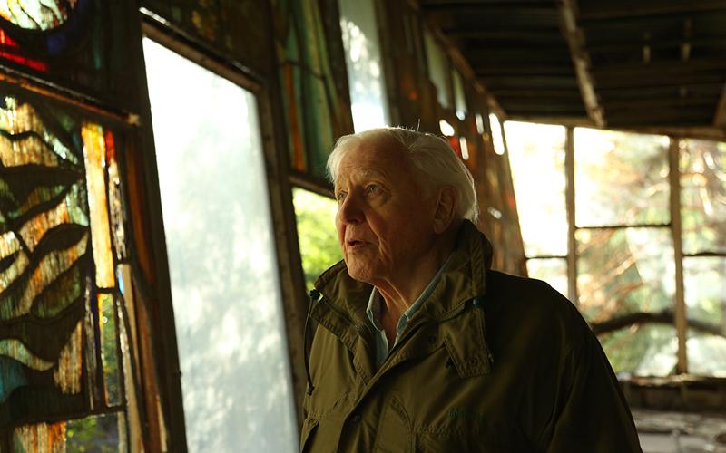 David Attenborough, Why Did It Take You So Long?