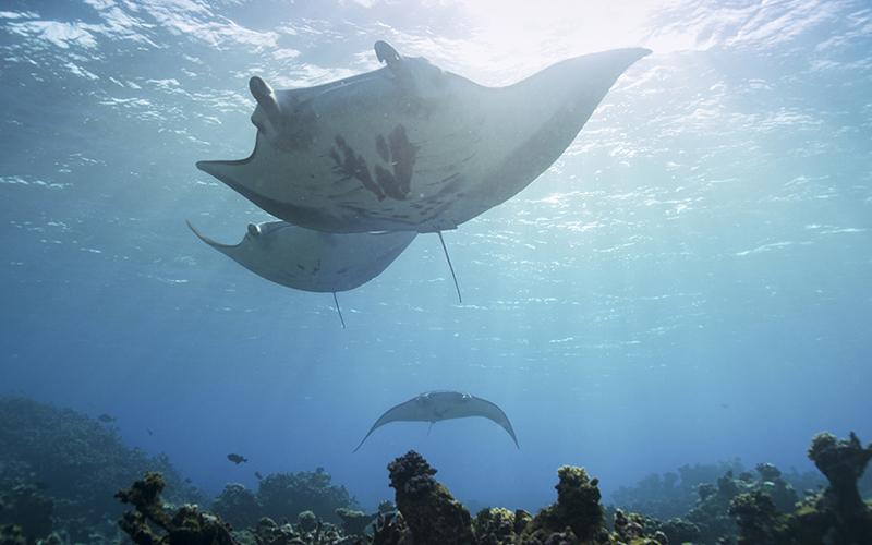 Ian Shive's Marine National Monuments