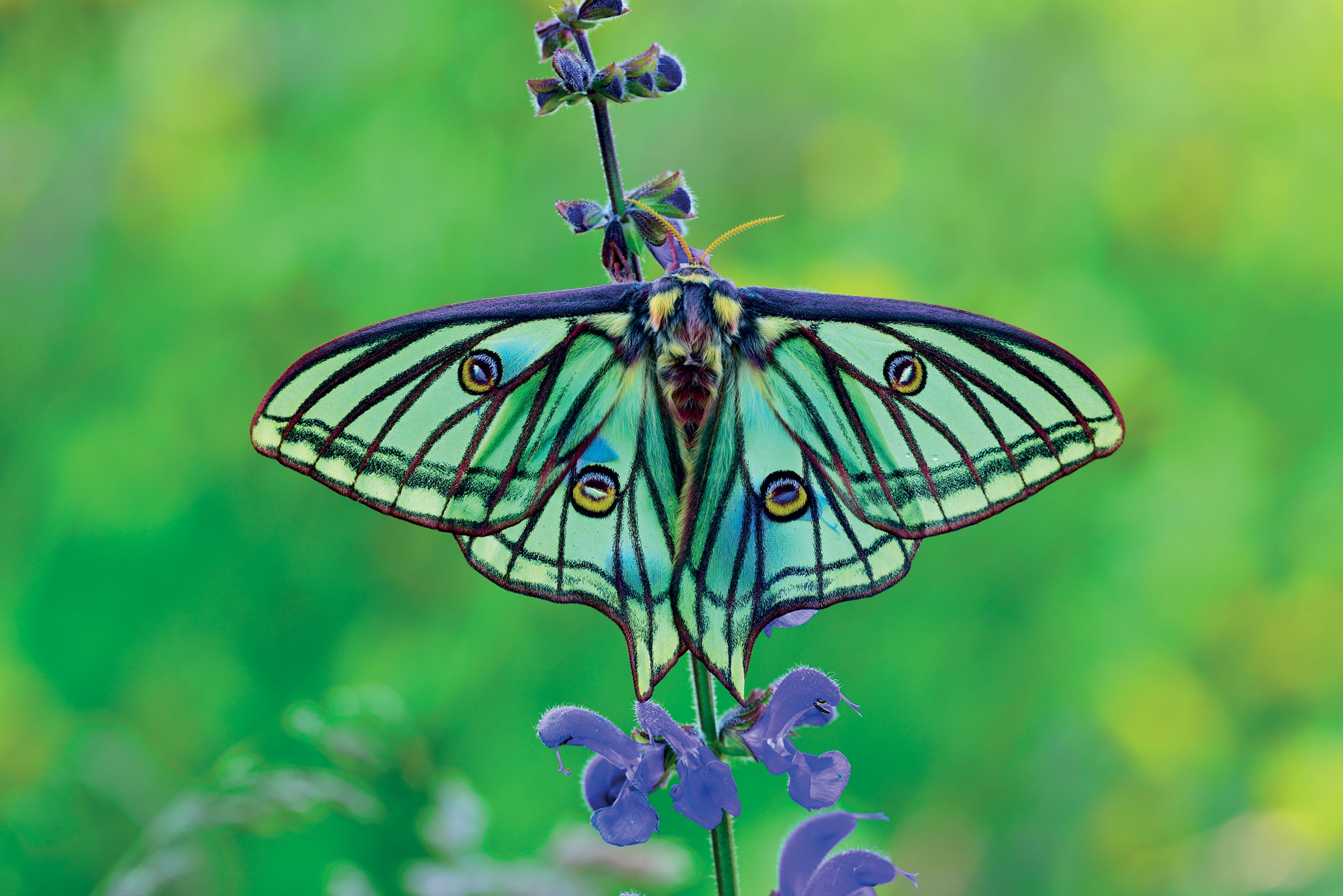 the wild world of butterflies sierra club