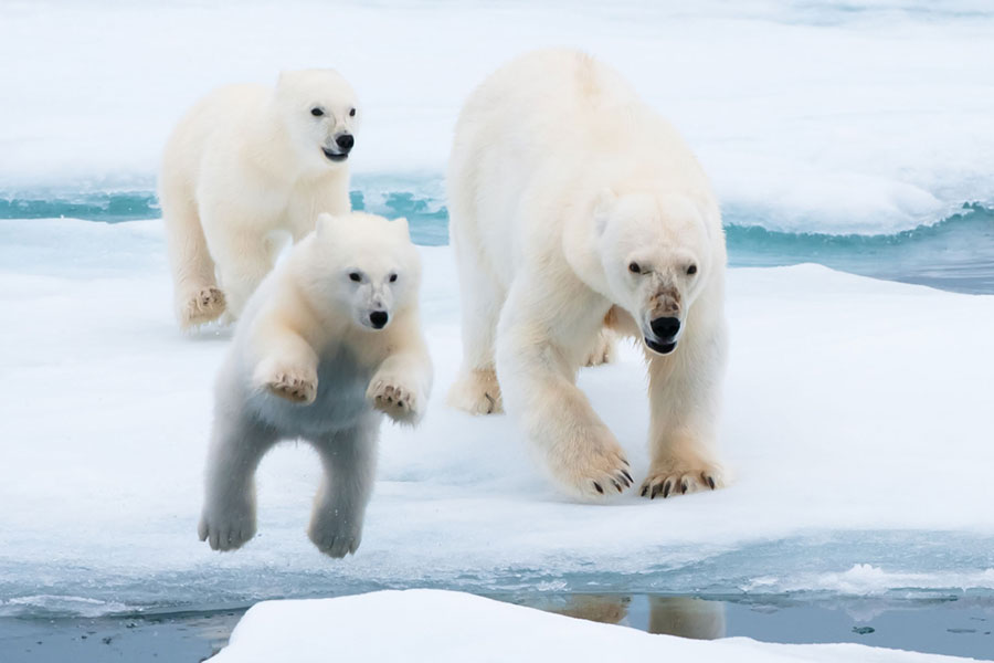 Arctic Ice   Sierra Cl...