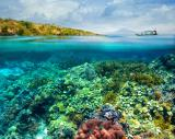 Corals, sponges, and anenomes appear static but are actually in constant motion.