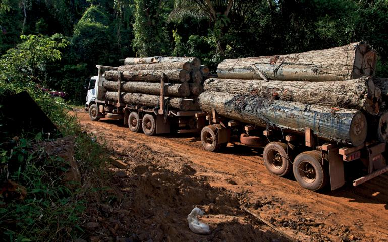 illegal loggig Logging is the cutting, skidding, on-site processing, and loading of trees or logs onto trucks or skeleton cars in forestry, the term logging is sometimes used.