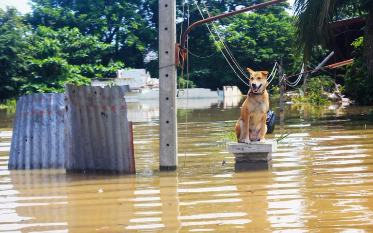 What Happens to Animals During Natural Disasters? | Sierra Club