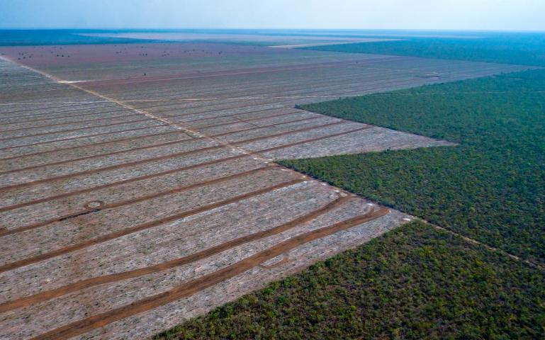 Deforestation in the Cerrado