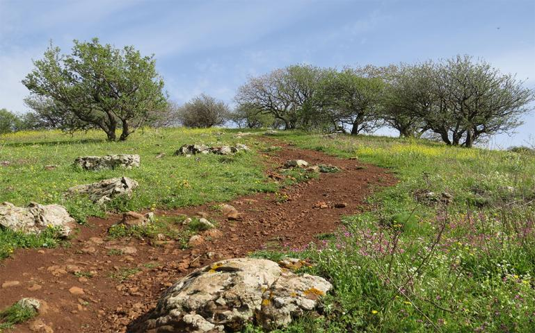 Mountains, Minefields, and the Sea of Galilee: Following the Golan Trail