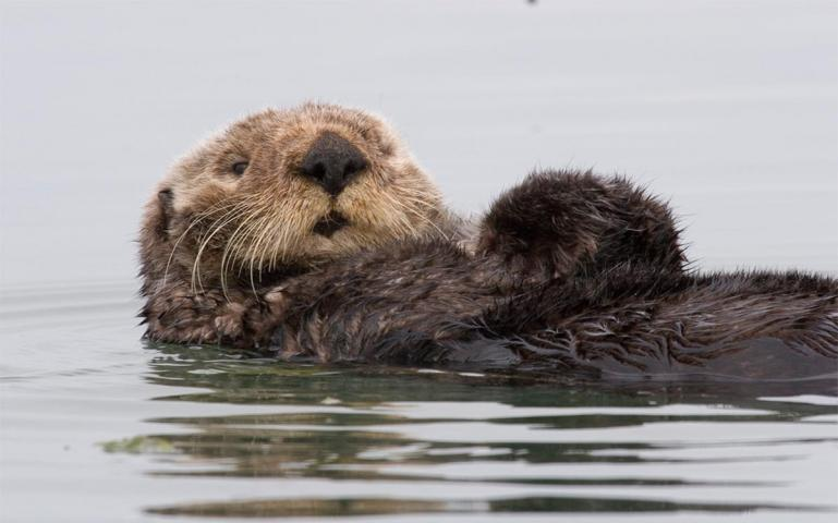 Image of: Earthtrust Endangered Species Act Is Working For Sea Turtles And Marine Mammals Marine Mammal Commission Endangered Species Act Is Working For Sea Turtles And Marine Mammals