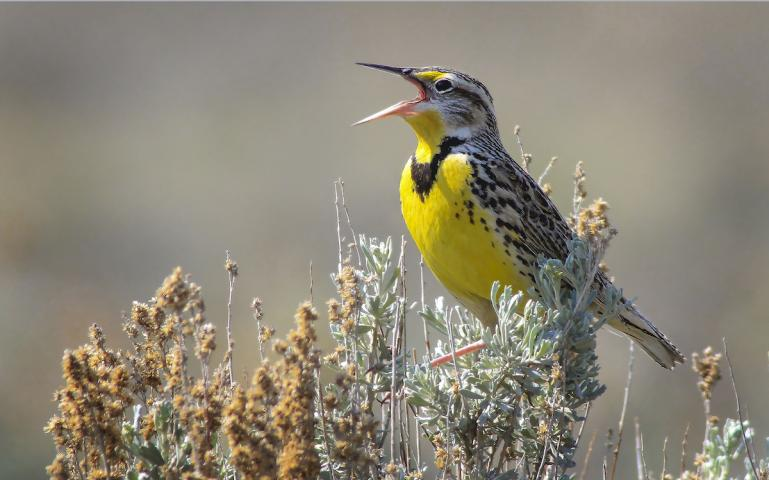 3 Billion Birds Across Many Species Have Disappeared in North America