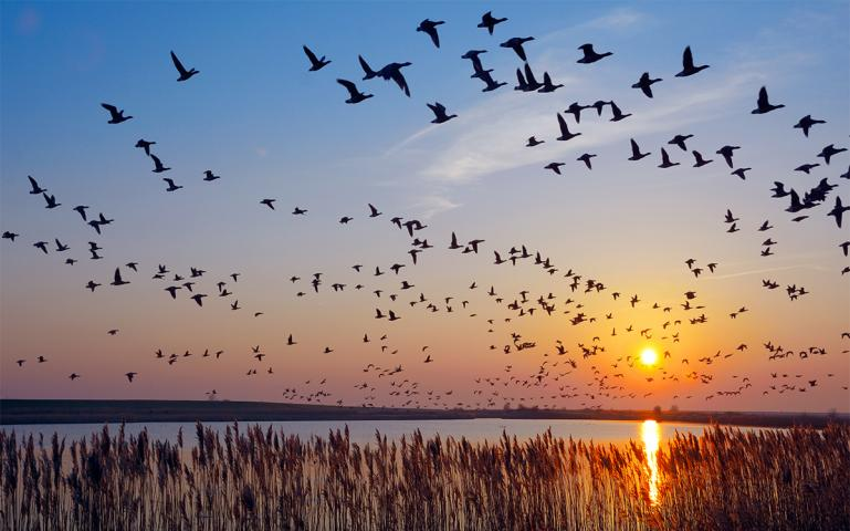 India Intends To Cooperate Globally To Prevent Extinction Of Migratory Birds