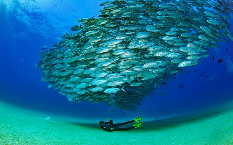 Mexican Fisherman Juan Castro Saved His Beautiful Marine Ecosystem, and He'll Save Yours, Too